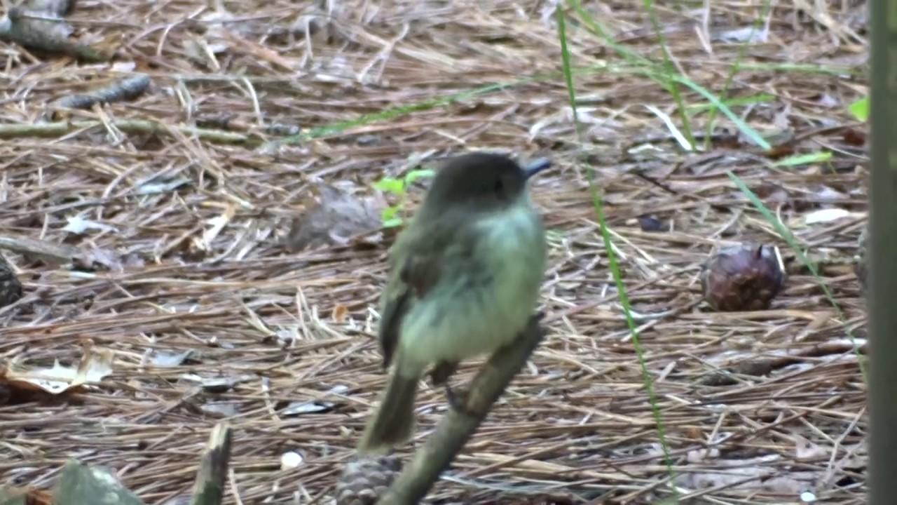 Mignon petit oiseau, quel est son nom? - YouTube