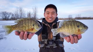 GIANT Bluegill CATCH CLEAN COOK! (Ice Fishing)