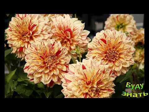 Вопрос: Как сохранить срезанные цветы (чтобы они стояли дольше )?