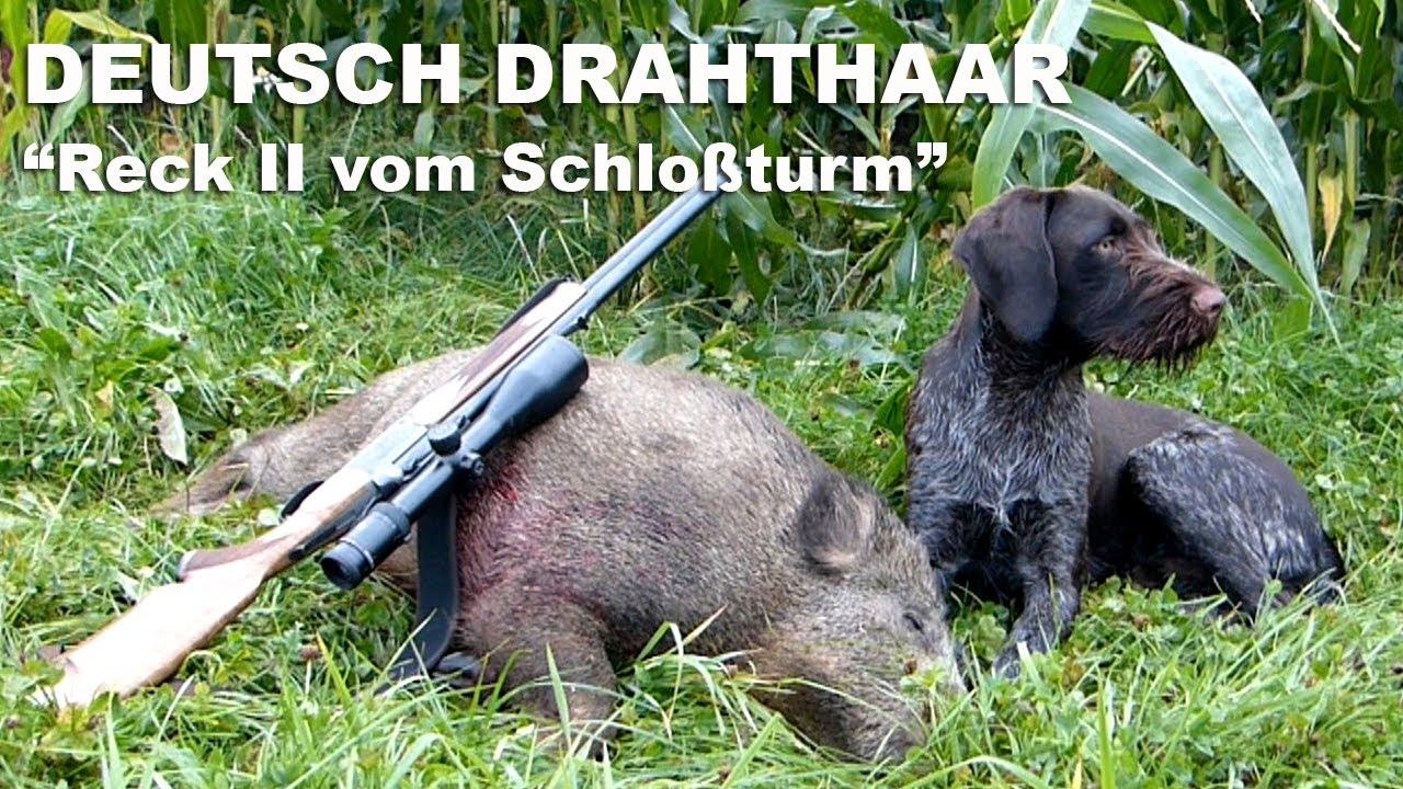deutsche sau