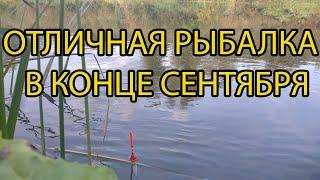 Рыбалка на поплавок в конце сентября сход мутанта и немного спиннинга