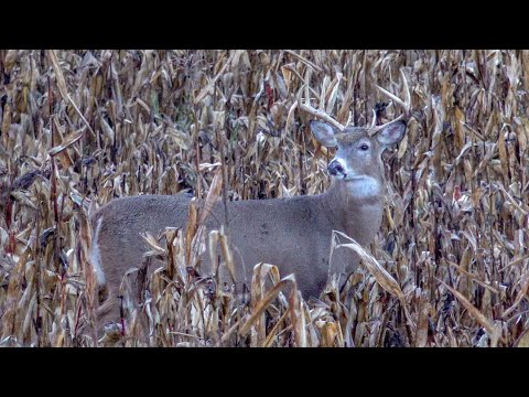 Michigan Bow Hunting | Big Buck On A Rainy Night