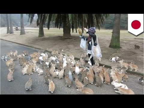 Bunny Stampede Woman Chased By Rabbits In Japan Youtube