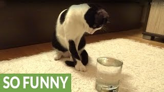 Cat has mind blown by sparkling water