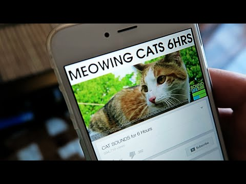 CRAZY CAT PRANK! - HOW TO PRANKS