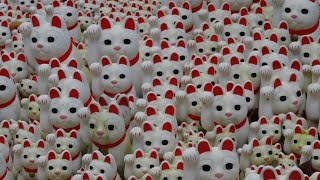 [#042] 豪徳寺 招福観音堂 招福猫児(招き猫) [ Gotoku-ji Temple  maneki-neko (beckoning cat) ]