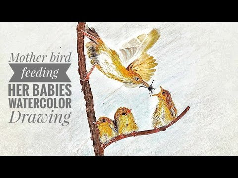 Mother bird feeding her babies-Watercolor Drawing