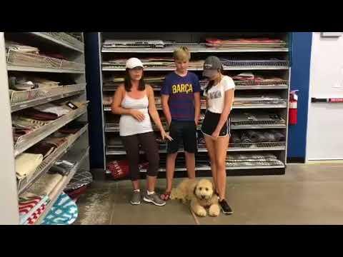 6mo Soft Coated Wheaten Terrier Remy's Testimonial ~ Best Terrier Trainers Phoenix