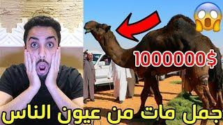 العين والحسد#3 جمل ب مليون ريال يموت من عيون الناس !!!😱💔