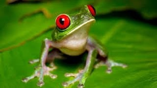 Frogs National Geographic Documentary HD