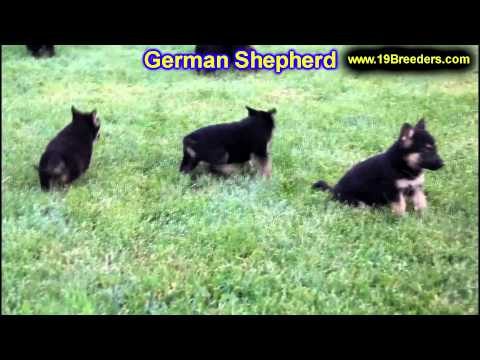 German Shepherd, Puppies, For, Sale, In, Columbus, Ohio, OH, North Ridgeville, Mason, Bowling Green,