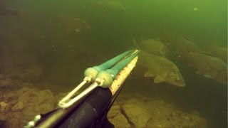 Подводная охота: Награда тем, кто умеет ждать! (с озвучкой)