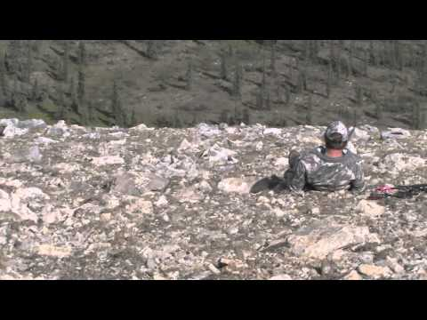 2011 DALL SHEEP Northwest Territories