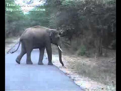 Tamilnadu chinnar Anamalai  elephant forest amazing