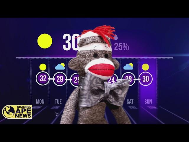Sock Monkey News