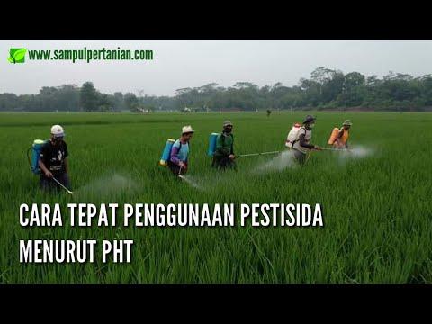 Cara tepat penggunaan pestisida menurut prinsip Pengendalian Hama Terpadu (PHT)