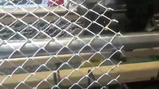 Смотреть видео Плетеная сетка рабица
