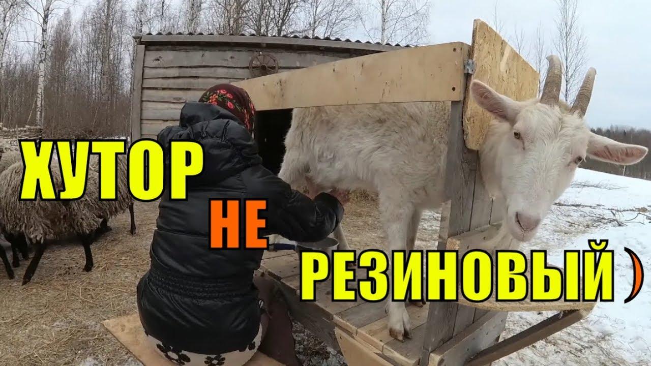 Фото супер доек, видео-гусь за пшено ебусь