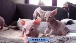 #ПРИКОЛЫ ВИДЕО! Смешная подборка 2016. Смешное видео про животных#
