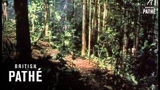 Ambush Reel 1 (1964) MP3