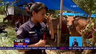 Pengungsi Gunung Agung Capai Angka 100 Ribu Jiwa, BNPB Sudah Pasang Alarm Peringatan Erupsi - NET16