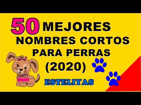 50 MEJORES NOMBRES CORTOS PARA PERRAS (2020) TE VAN A ENCANTAR!