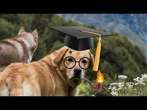 STORY OF MAX - World's SMARTEST DOG | THE HIMALAYAN HUSKY