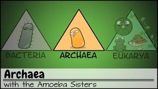 Archaea thumbnail