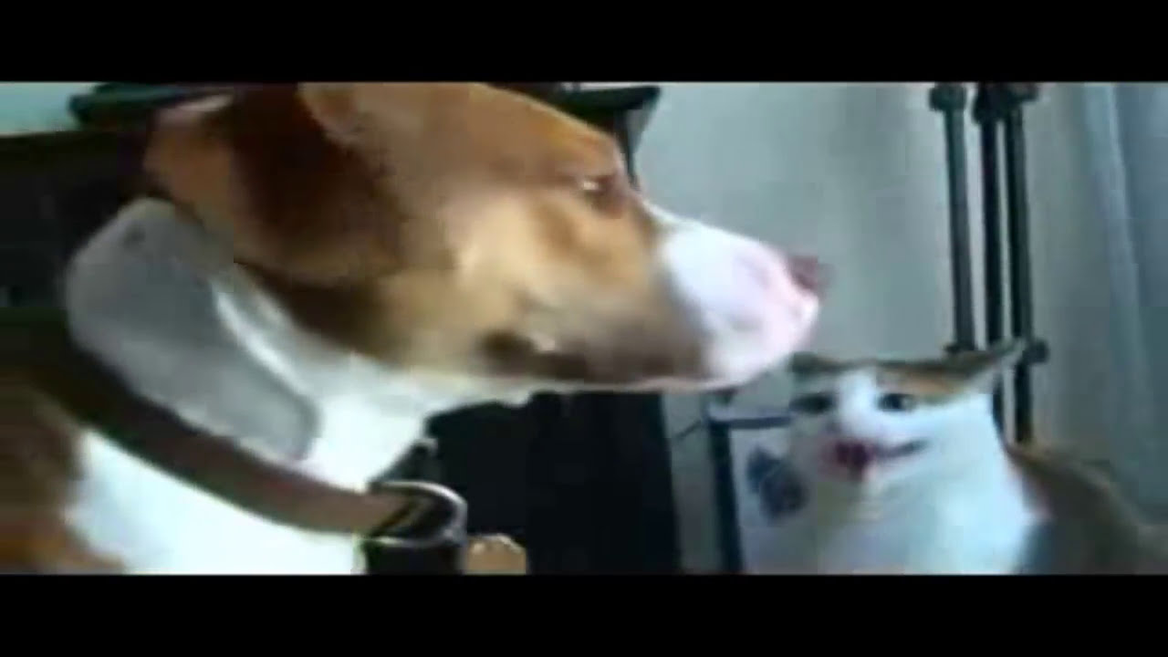 Image of: Vines Youtube Funny Cats And Dogs Animal Videos Youtube