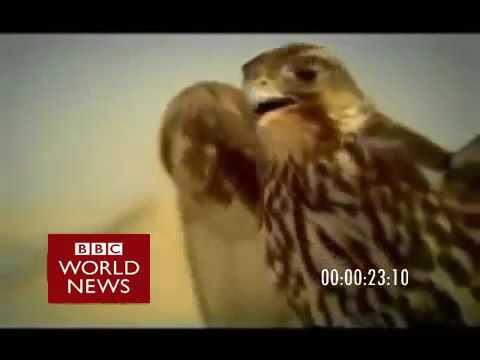BBC Arabic Countdown