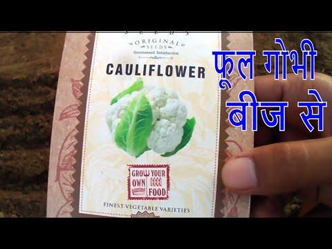 फूल गोभी को बीज से कैसे उगाये /How to Grow Cauliflower From seeds -4 Nov 2017