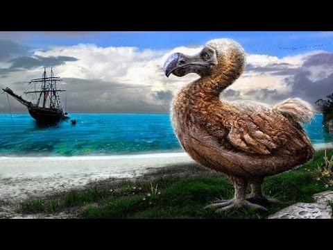 dodo kuşu ile ilgili görsel sonucu