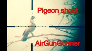 pigeon hunting with air rifle bsa r10 mk2 and a little decoying