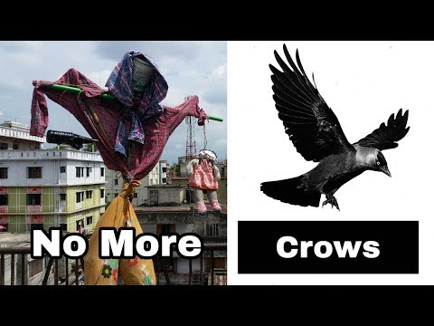 Make Scare Crow At Home | Get Rid Of Crows
