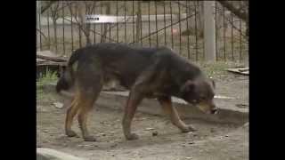Власти придумали, как избавить Красноярск от бродячих собак