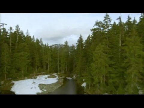 Forestry In Canada: Exploring Boreal Forest With Pierre Levac