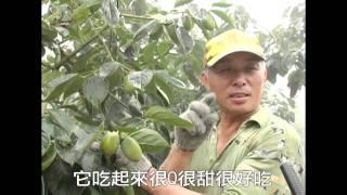 100年嘉義縣番路鄉柿子產業發展補助計畫成果拍攝