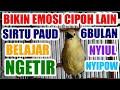 Bikin Emosi Sirtu Lain Cipoh Paud Belajar Ngetir  Mp3 - Mp4 Download