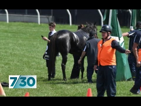 Six horse deaths in six Melbourne cups | 7.30