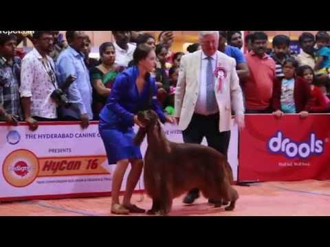 HYCAN PET SHOW HYDERABAD 2016