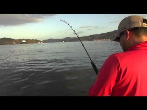 Trinidad Tarpon 2015 FISH FINDER SURINAME