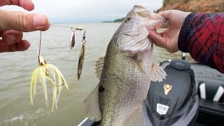 Game Changing Fishing Tips for Spawning Bait Fish