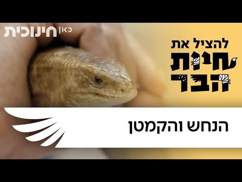 להציל את חיות הבר | הנחש והקמטן