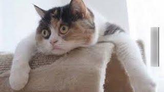 Funny animals compilation 2014- 2015.............Clip hài động vật mới nhất!