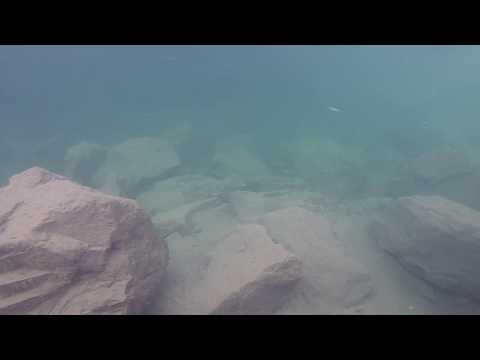 EPIC  School Of Rocky Mountain Whitefish (Unedited)