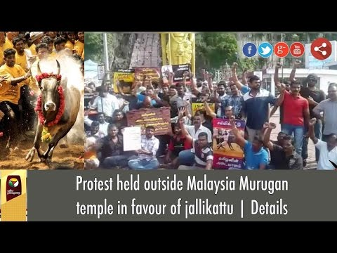 Protest held outside Malaysia Murugan temple in favour of jallikattu | Details