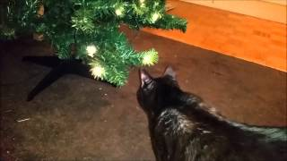 Vlogmas Day Two   Christmas Trees, Tinsel and Cats Thumbnail