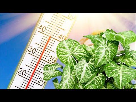 Уход за комнатными растениями в жару.