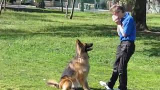 Asta The Clever German Shepherd
