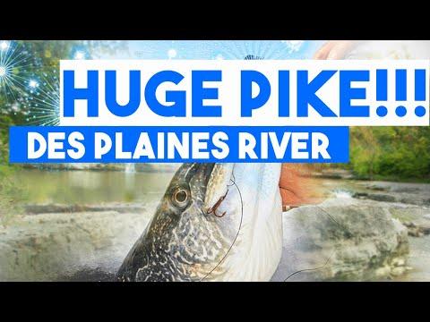 Monster Northern Pike!! | Des Plaines River | 1 Rod Nenad